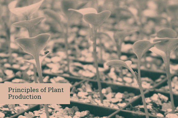 Principles of Plant Production